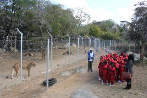 MJS Students Viewing Lions